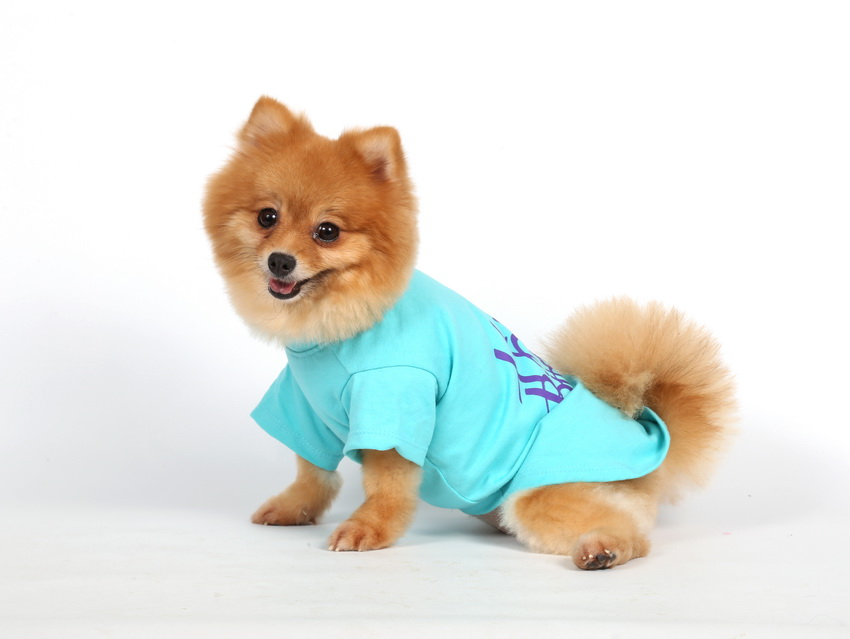 DoggyDolly T471 Hundeshirt Happy Birthday