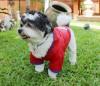 DoggyDolly DR054 Regenmantel für Hunde rot - S