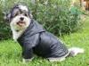 DoggyDolly DR055 Regenmantel für Hunde schwarz - XL