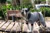 DoggyDolly DRF003 Jogginganzug für Hunde grau