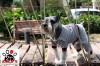 Vorführmodell - DoggyDolly Hundejogging grau DRF003 - XS-