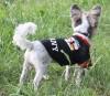 DoggyDolly WM2015B Hundetrikot Frauenfußball schwarz