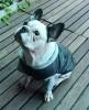 DoggyDolly MOPS&CO FP-W109 Parkapullover für kräftige Hunderassen schwarz-grau