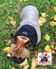 Vorführmodell - DoggyDolly MOPS&CO Hundeparka cappuccino-schwarz FP-W399 FP-S