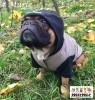 DoggyDolly MOPS&CO FP-W399 Parkapullover für kräftige Hunderassen cappuccino-schwarz