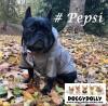 DoggyDolly MOPS&CO FP-DR052 Regenmantel für kräftige Hunderassen bronze