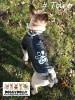 DoggyDolly MOPS&CO FP-DR055 Regenmantel für kräftige Hunderassen schwarz