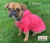 DoggyDolly MOPS&CO FP-DR063 Regenmantel für kräftige Hunderassen pink