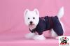 Vorführmodell - DoggyDolly Hundejogging blau DRF029